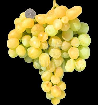 Виноград Надёжный