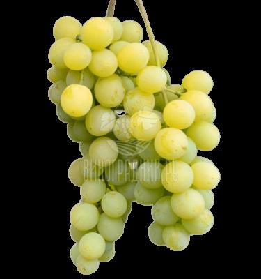 Виноград Озон
