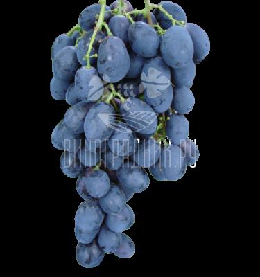 Виноград Чёрный хрусталь