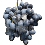 Виноград Орда