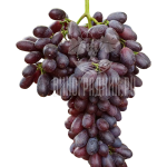 Виноград Князь Трубецкой