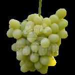 Виноград Лоно